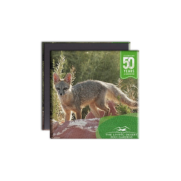 KIT FOX CANVAS MAGENT